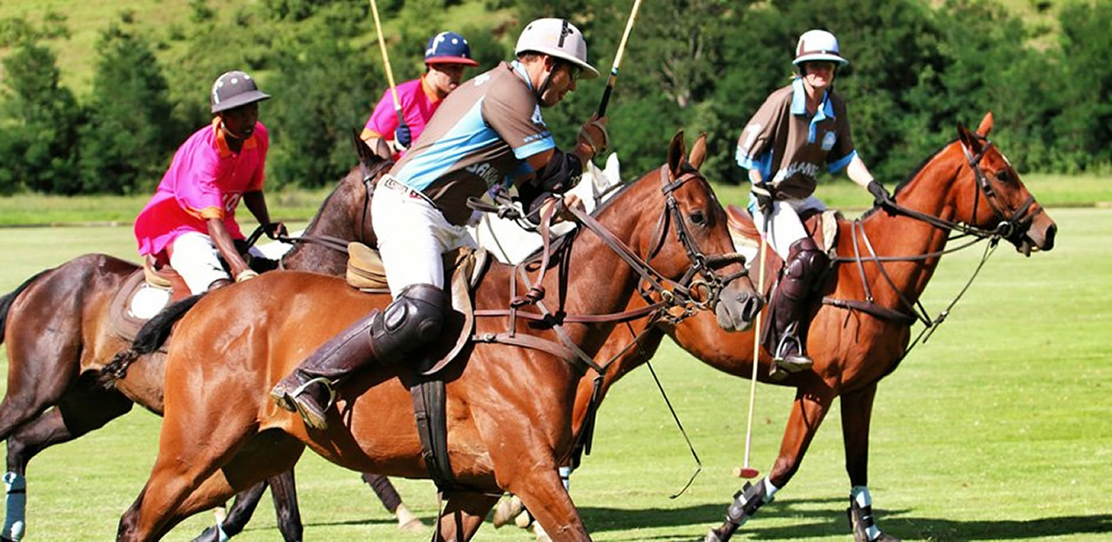 Polo in South Africa for holiday