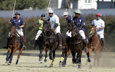 polo horses to rent