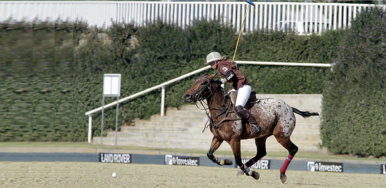 polo-horses-lease