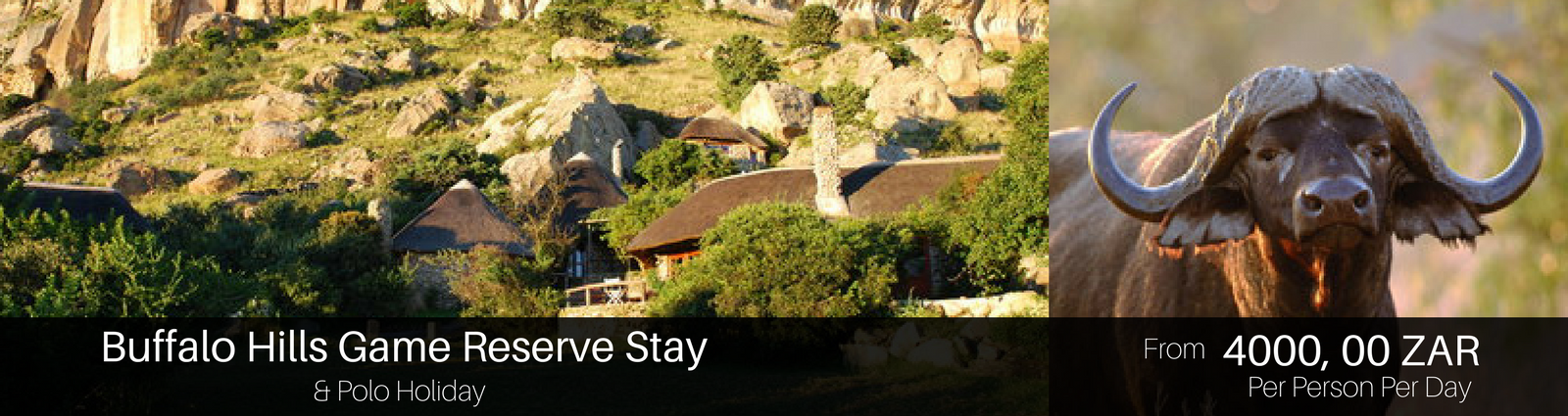 Polo Holiday Package option at Buffalo hills Game Reserve